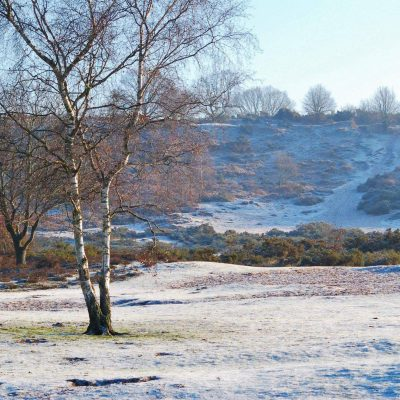 Winter-Hartlebury-Common-by-Gemma-Henry